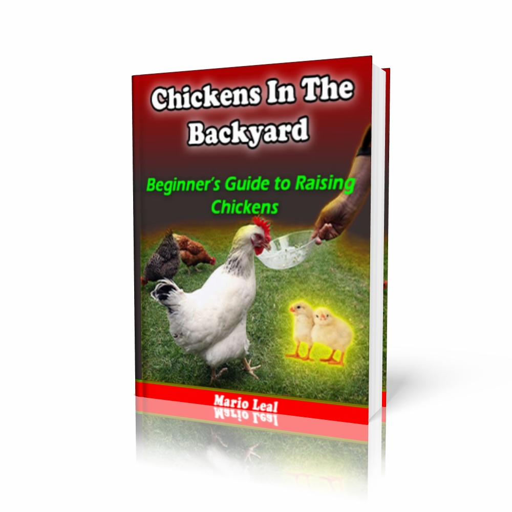 chickens in the backyard beginner u0027s guide to raising chickens