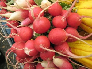 Picture of Radishes.