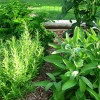 Beautiful Herb Garden