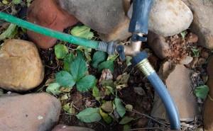 Watering Hose